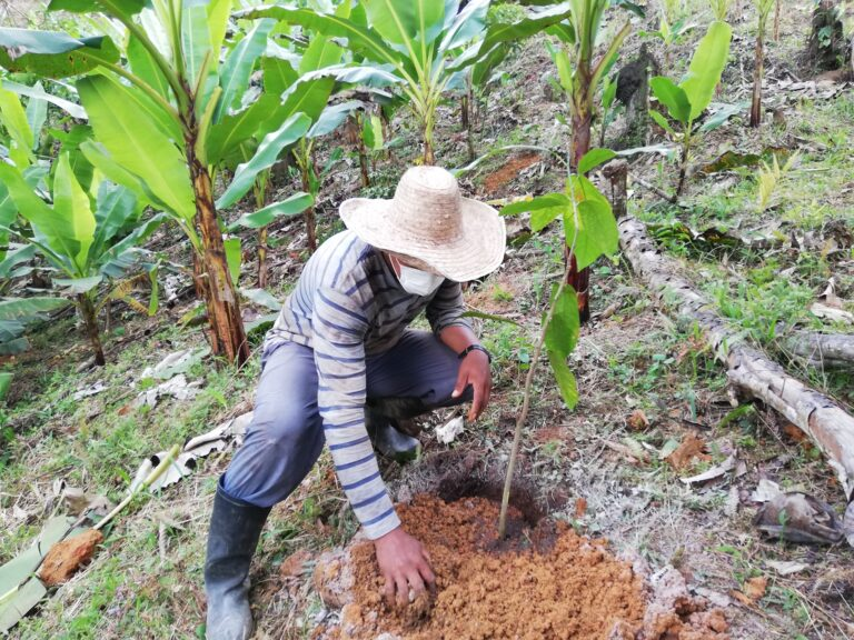 ACT Cacay planting